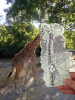 PvC - Giraffe by Dolphishy