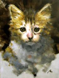 cat2 by alrasyid