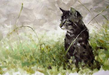 cat on stroke by alrasyid