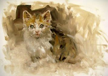 cat by alrasyid