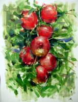 apples by alrasyid