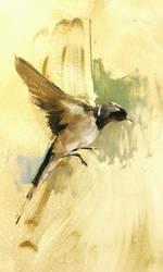 bird sketch by alrasyid