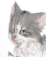 Destin by Catsperri