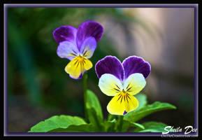 Little Flowers by SheilaDee
