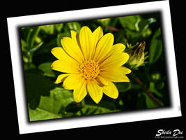 Yellow Flower of California by SheilaDee