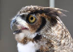 Great Horned Owl by Blue-Sun-Jewelers