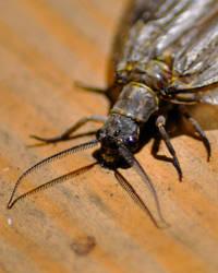 Stonefly by Blue-Sun-Jewelers