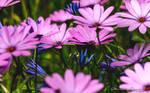 Wild Flowers Photo 6 by StachRogalski