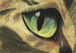 cat's eye by safija36