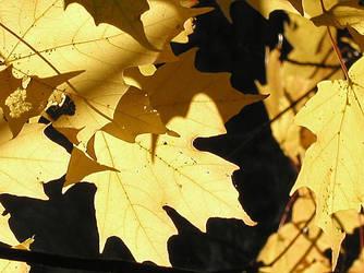 Fall Maple by originalone