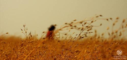 grass n girl by Bheeshoom