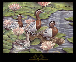 . Ducks by a Pond . by TheBlueLummox