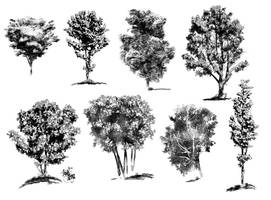 ink drawings of trees by angelitoon