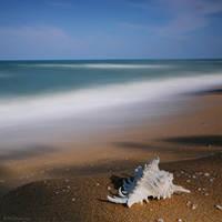 still life by warnaiman