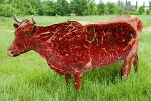 Beef by offermoord