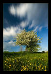 Spring in Gorce Mountains III by KarolP