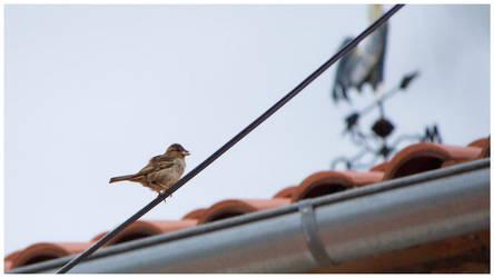 bird by dbist
