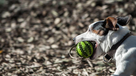 diXie and the ball by dbist
