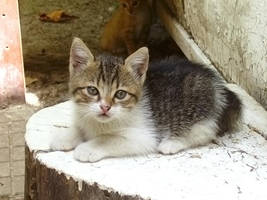 Kitten-2 by Dobina