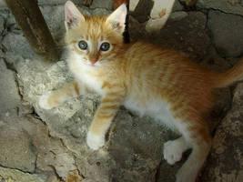 Kitten-3 by Dobina