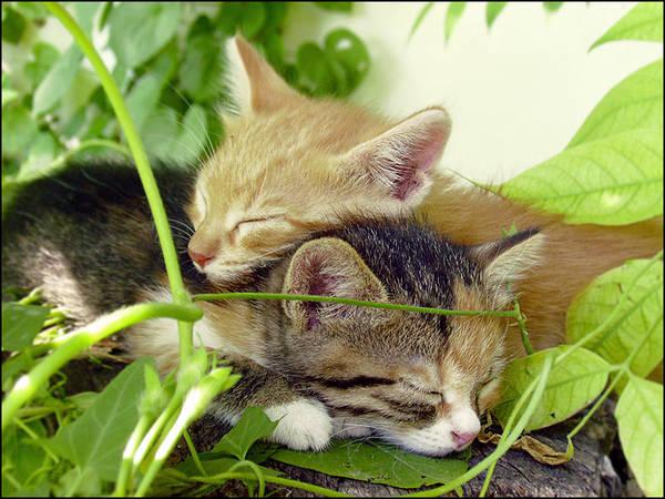Sweet dreams by Dobina