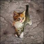 Kitten-9 by Dobina