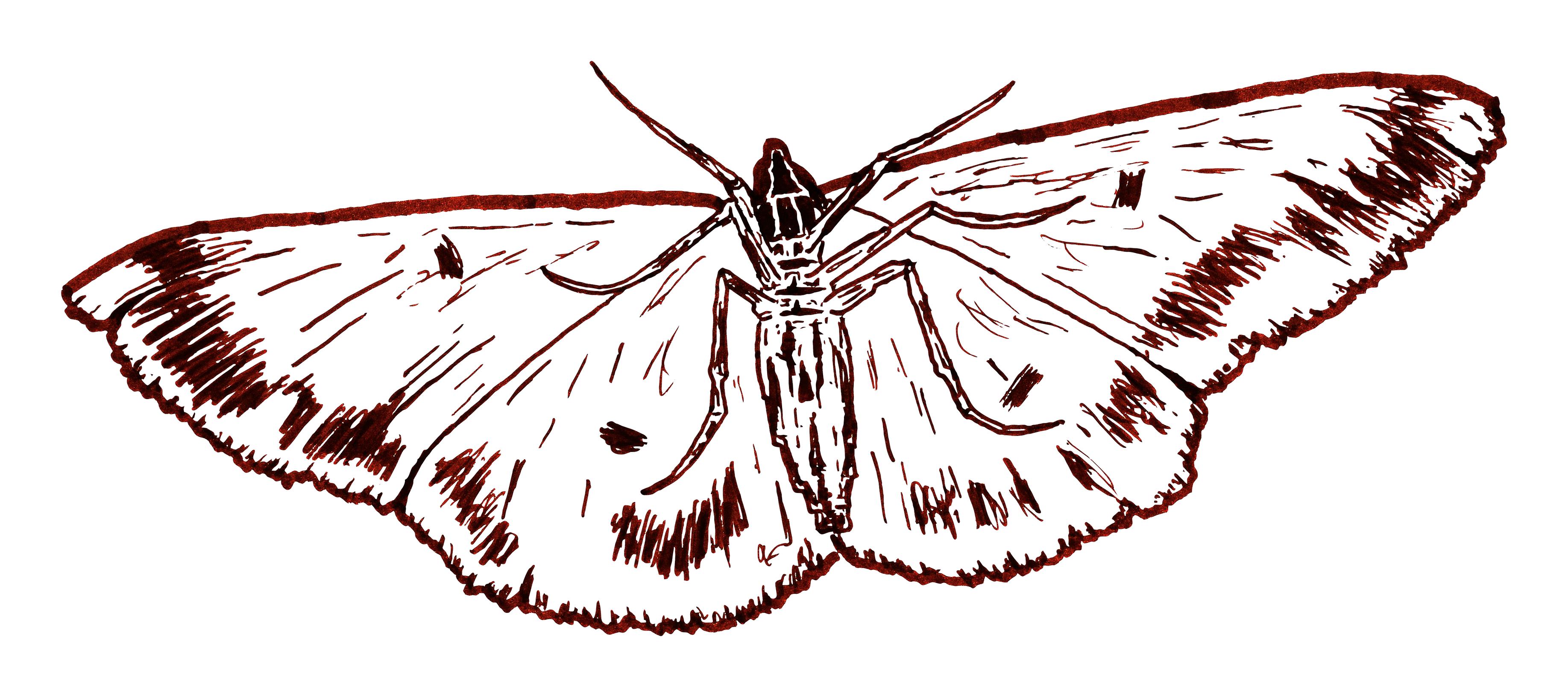 Moth by RetSamys