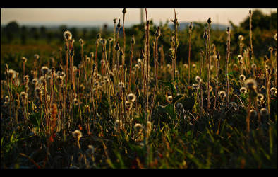 Green flower II by Csipesz