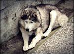 Dog 6 by Csipesz