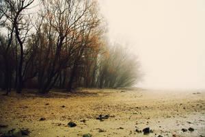 Misty beach... by Csipesz