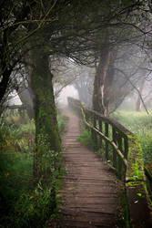 Foggy morning 6 by Csipesz