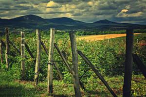 Raspberry farm by Csipesz