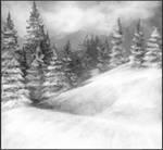 Among the Reaching Pines by IndigoFlamingo