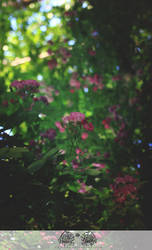 May-rosa03 by ericzoe
