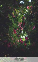 May-rosa02 by ericzoe