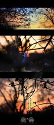 Sakura in winter by ericzoe