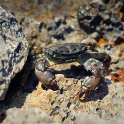 crab by tobiasth