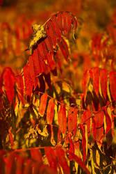 fall by tobiasth