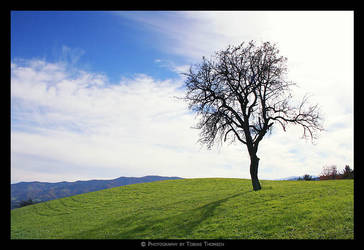 shadow tree by tobiasth