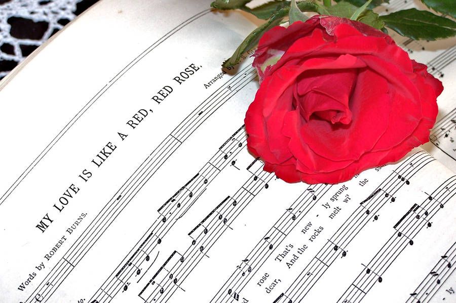 our love is like a red red rose