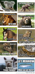 Funny-animals-memes-captions by Unicorns-Are-Beast