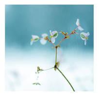 Flowers In Winter by hazydream