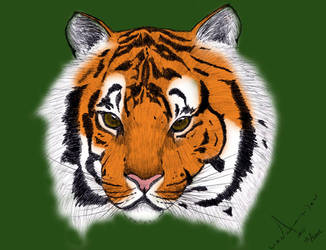 Bengal Tiger colored by RM-Tryllel