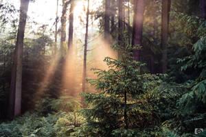 Sunlight leaking in by SeptimusStuff