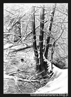 Winter by KostrzewskaMarlena