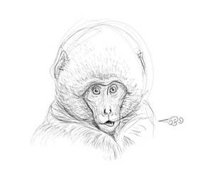 Cold Japanese Monkey by farneze
