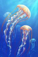 Jellyfish by AnekaShu