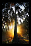 Tree Of Light by MarcoHeisler