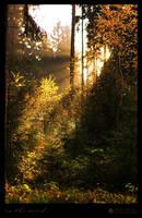 in the wood II by MarcoHeisler