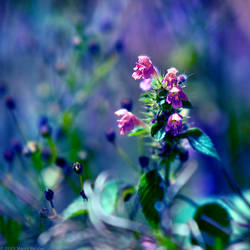 The Fields Of Color VI by MarcoHeisler